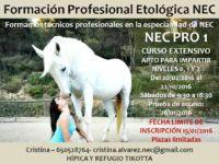 CURSO EXTENSIVO NEC PRO 1