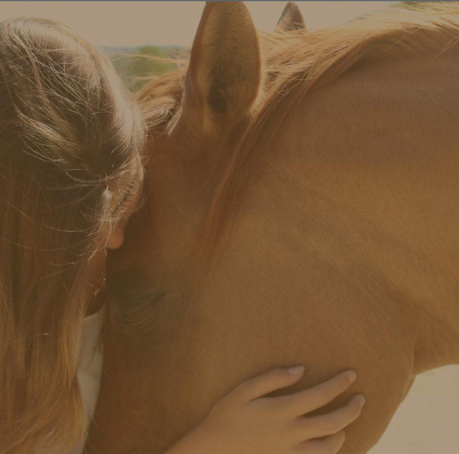 Apadrinar un caballo Donaciones para caballos