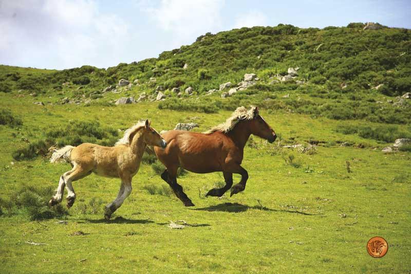 La naturaleza del caballo